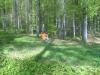 Sauberer_Waldrand_16042011